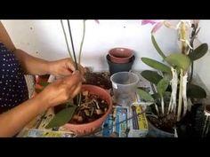 Como fazer pendurador para orquídeas - YouTube