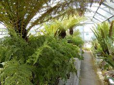 The fern glasshouse at Thwaite Botanic Gardens, Hull