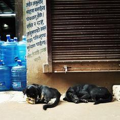 #dog #street #sleep