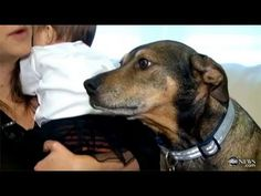 DOG HERO - Rescue Dog Duke Saves Dying Baby October 2012    A rescue dog is being called a hero after saving the life of a Portland, Conn., family's infant daughter.    The Brousseau family had already gone to bed on Sunday night when their dog, Duke, who was adopted nearly six years ago, jumped on their bed and began shaking uncontrollably. Duke's ...