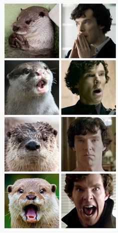 "This is titled, ""Otters Who Look Like Benedict Cumberbatch."" Really."