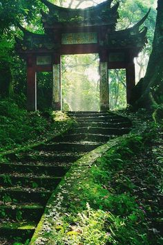 Beautiful nature and temples in Japan, I love it! The Places Youll Go, Places To See, Beautiful World, Beautiful Places, Beautiful Ruins, Beautiful Forest, Beautiful Pictures, Photos Voyages, Japan Travel