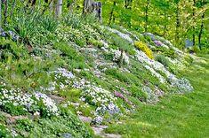Simple Slopped Backyard Landscaping Slopped Backyard Landscaping Landscaping Ideas For Sloped Backyard Garden Design Ideas On A Landscaping On A Hill, Landscaping With Rocks, Landscaping Ideas, Steep Hillside Landscaping, Mulch Landscaping, Landscaping Software, Backyard Ideas, Landscaping Contractors, Hillside Garden