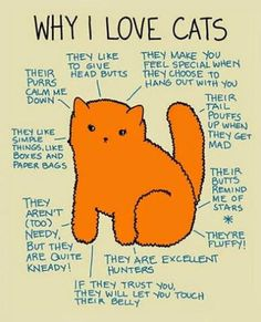 I think that just about covers it! #catlover #cats #ILoveCats