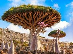 Image result for socotra island