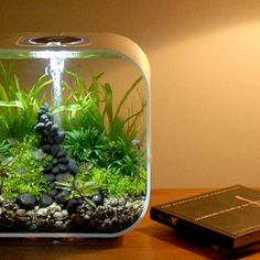 LIFE white. Low level home lighting and a heavily planted LIFE tank. Very tranquil.
