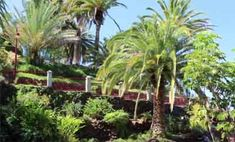 A las afueras y en la parte alta de la ciudad se extiende El Taoro, una gran zona verde de esparcimiento y pulmón natural de Puerto de la Cruz.   Asentado sobre un promontorio desde el que se puede ver...  #viajes #viajeros #viajesyturismo #viajaresvivir #turismo #viajerosporelmundo #viajerosdelmundo #canarias #destinosturisticos #tenerife #tenerifenorte #puertodelacruz #taoro #eltaoro Tenerife, Natural, Plants, North Shore, Vacations, Parks, Cities, Green, Teneriffe