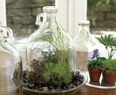 Apple Cider Jug Terrarium