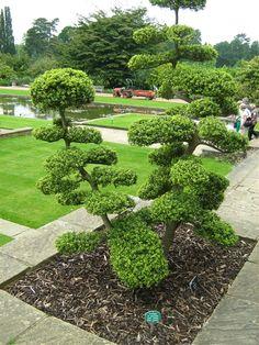 Inspirerande topiary