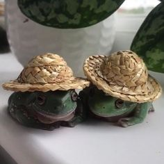 """kai on Twitter: """"… """" Cute Little Animals, Baby Animals, Funny Animals, Whites Tree Frog, Pet Frogs, Frog Pictures, Cute Reptiles, Frog Art, Frog And Toad"""
