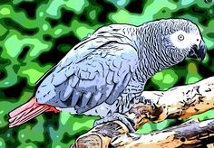 Andrew Jackson's parrot. | Tales of History and Imagination