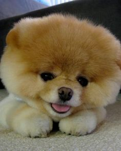 OMFG i want this dog