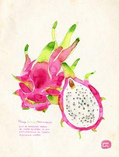 Dragon fruit - by Yuminette
