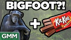 Real Bigfoot Facts (GAME) Real Bigfoot, Good Mythical Morning, Lifelong Friends, Beast, Facts