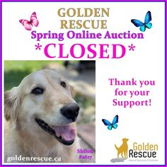 Golden Events, Auction, Thankful