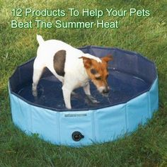 Twelve Products to Help Your Pets Beat The Summer Heat   ... see more at PetsLady.com ... The FUN site for Animal Lovers