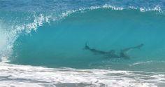 Thousands of swarming sharks empty Florida beaches - PhotoBlog