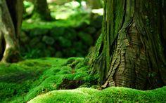мох, Дерево, лето, зелень, кора, лес