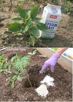 Veľký výber užitočných a dobrých nápadov pre efektívnejšie pestovanie rastlín v črepníkoch aj v záhrade | Babské Veci Diy Garden Projects, Diy Garden Decor, Diy Decoration, Garden Ideas, Garden Art, Gardening For Beginners, Gardening Tips, Flower Gardening, Home Vegetable Garden