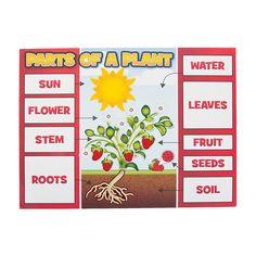 Plant+Part+Sticker+Scenes+-+OrientalTrading.com