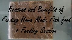 Reasons and Benifits of Feeding Home Made Fish Food and Feeding Session