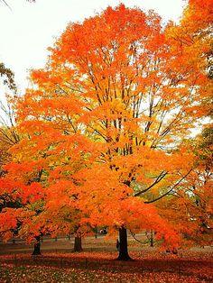 Central Park AUTUMN, New York City