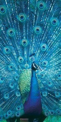 blue #Birds