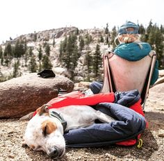 The Portable Dog Bed Sleeping Bag is the ultimate product for your beloved dog, every dog deserves a lovely warm cosy bed and sleeping bag right? Puppies And Kitties, Pet Dogs, Dog Cat, Dogs On Boats, Funny Dog Images, Outside Dogs, Outdoor Dog Bed, Cat Accessories, Animal Projects