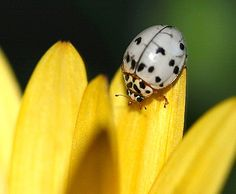 Ladybugs--they come in an assortment of colors--red (of course), pink, yellow and white just to name a few.