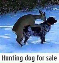 Now *this* is what you call a funny picture! Funny Animal Pictures Of The Day – 23 Hilarious Pics Funny Animal Pictures, Funny Animals, Cute Animals, Stupid Animals, Hunting Humor, Hunting Dogs, Funny Hunting, Tierischer Humor, Male Humor