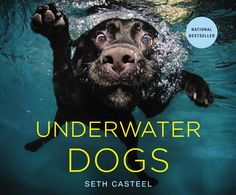 Underwater Dogs. Love dogs. This one looks a little scary and weird, but in a good way!