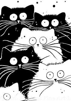 Kim Haskins cats. . Flash Mog:
