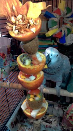 Making Homemade Bird Food - Its Easy To Keep Birds Coming Cockatiel Toys, Budgies, Parrots, Parrot Toys, Parrot Bird, Parrot Stand, Diy Bird Toys, African Grey Parrot, Bird Aviary