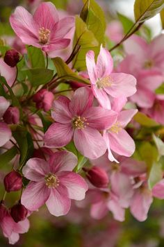 The love bloom Amazing Flowers, Pink Flowers, Beautiful Flowers, Simply Beautiful, Spring Blossom, Arte Floral, Flowering Trees, Flower Pictures, Flower Wallpaper