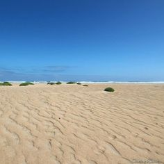 Beautiful Yambuk beach near Port Fairy even if it must be one of the windiest beaches in the state! Great capture of the gorgeous landscape there courtesy of @thesage00 from last weekend's #portfairyinstameet #liveinvictoria #victoria #vic #yambuk #portfairy #portfairypics #beach #sea #ocean #sand #bluesky #surf #waves #wild #greatsouthcoast #beautiful #scenic #nature #summer #love #australia #liveinaustralia by liveinvictoria http://ift.tt/1UokfWI