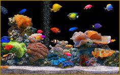 Healthy, balanced, salt water aquarium.