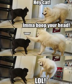 This made me laugh more than it should have :3