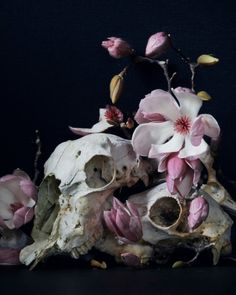 both the skull and the flowers are white making them comparable to the eye. And hence linking them together Elf Rogue, Yennefer Of Vengerberg, Animal Bones, After Life, Vanitas, Foto Art, Losing A Dog, Animal Skulls, Persephone