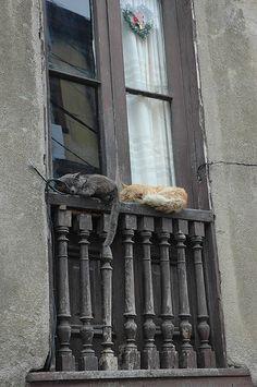 En la ventana... o balcón