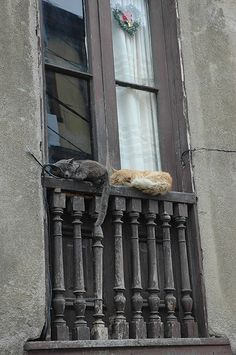Cats sleep in the darndest places.  I would worry about these ones falling off the railing.