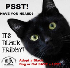 The Davinci Foundation for Animals- Black Friday, Adopt a Black Pet, Save a Life!