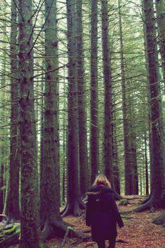 Bosque frondoso. Bergen.