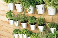 Kräuterwand - I love this idea Hanging Herbs, Hanging Planters, Diy Garden, Summer Garden, Glass Planter, Planter Pots, Small Gardens, Outdoor Gardens, Gardens
