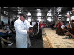4-H poultry show the Lancaster Co Super Fair