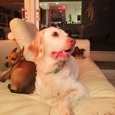 Daphne ~ Mac ~ Wolfie ~ ToTo is in Daddy's lap... the house is quiet and still ~ we are one. Lily is in our hearts