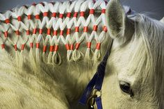 Bautzen, Germany: The plaited mane of a horse prepared for the Sorbian Easter procession. A procession of mounted riders dressed in 19th century costume who travel from village to village to sing and announce the resurrection of Christ