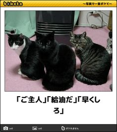 A「Hey human!」Cat.C「hurry up!」 human.A「Yesser!」 Animals And Pets, Funny Animals, Cute Animals, Mean Cat, Smiling Cat, Cat Jokes, Funny Cute Cats, Cat Behavior, Cata