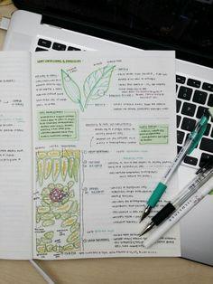 studious-annabeth:  more bio notes!!