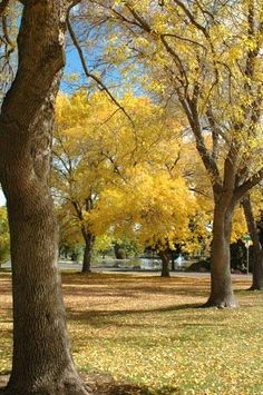 Big Trees and Big Fall Color in Reno's Idlewild Park