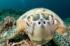 10 things about underwater photography
